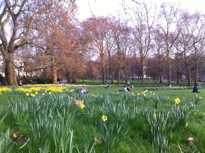 green park daffodils 3