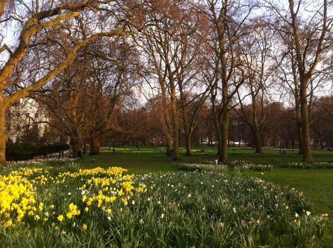 green park daffodils