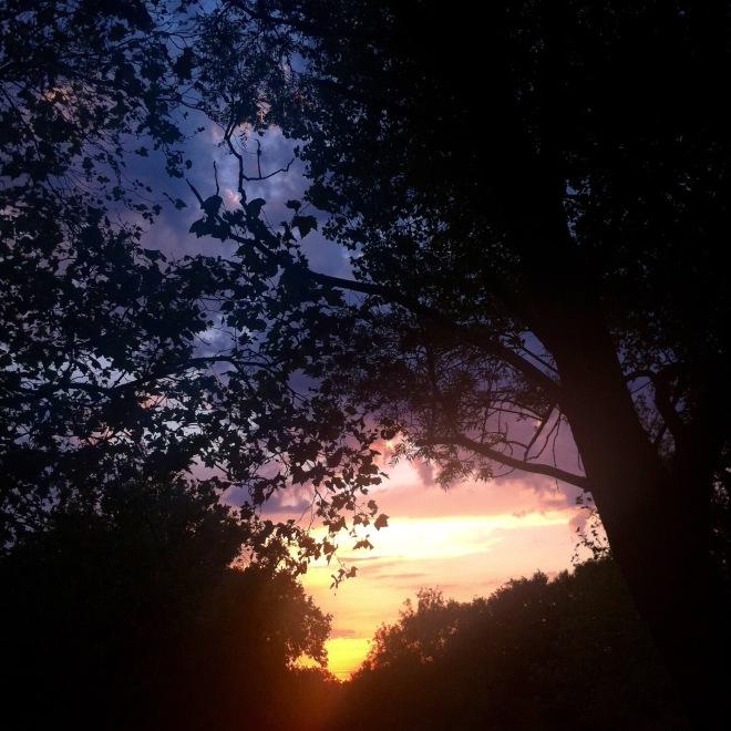 Summertime evening walks